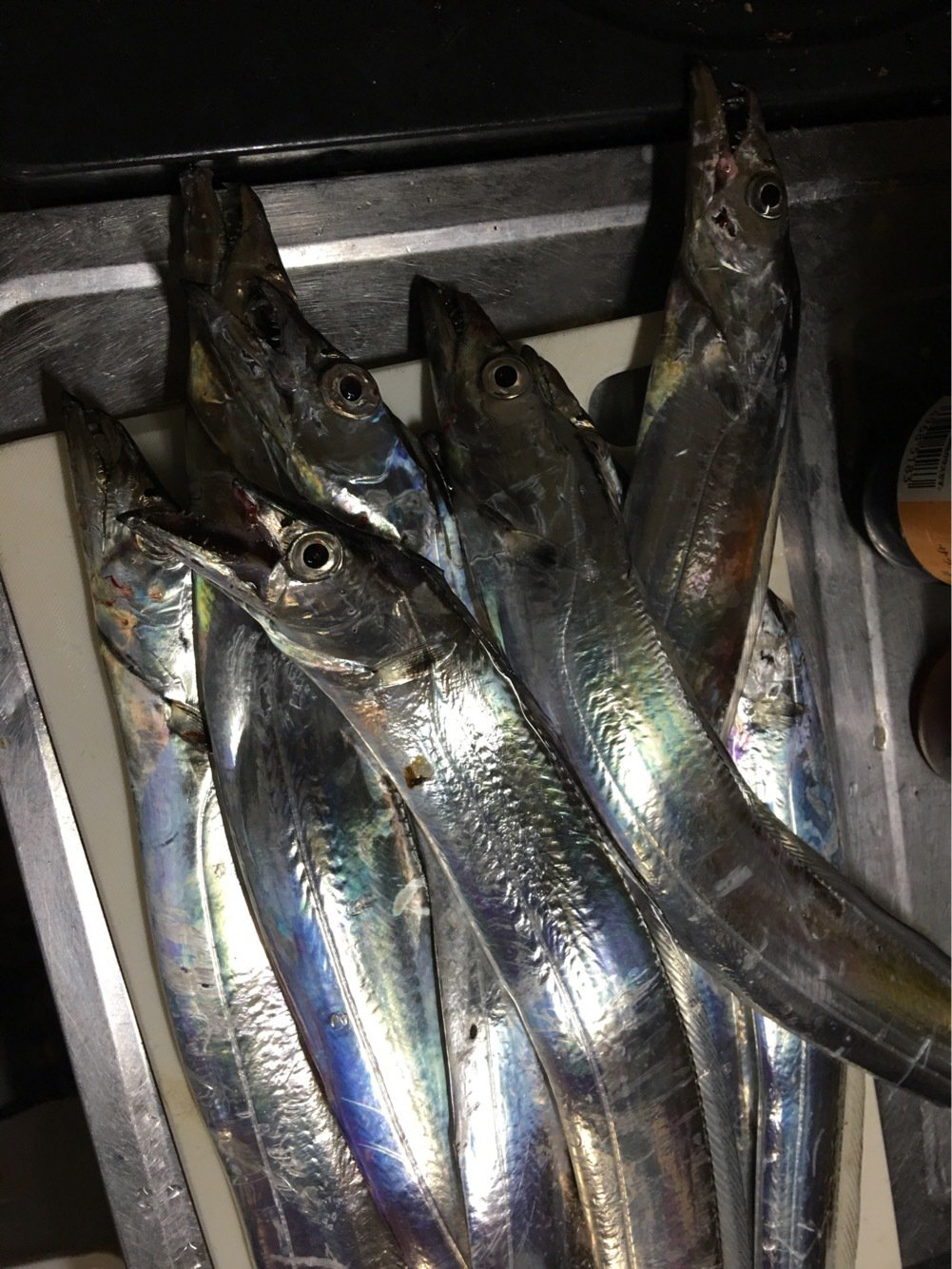 ゆうきちさんの投稿画像,写っている魚はタチウオ