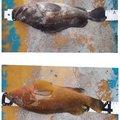 ☆*:真鯛中毒*:☆さんの新潟県西蒲原郡での釣果写真
