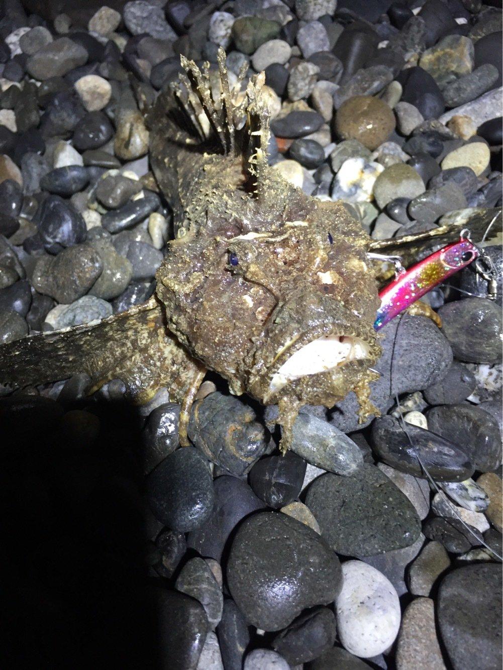 にぃにぃさんの投稿画像,写っている魚はオニオコゼ