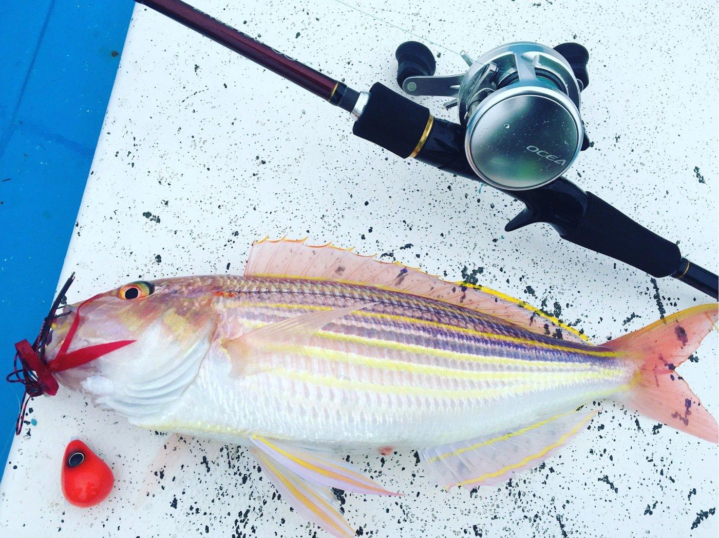 team esoさんの投稿画像,写っている魚はイトヨリダイ