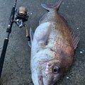 ゆちさんの長崎県佐世保市での釣果写真