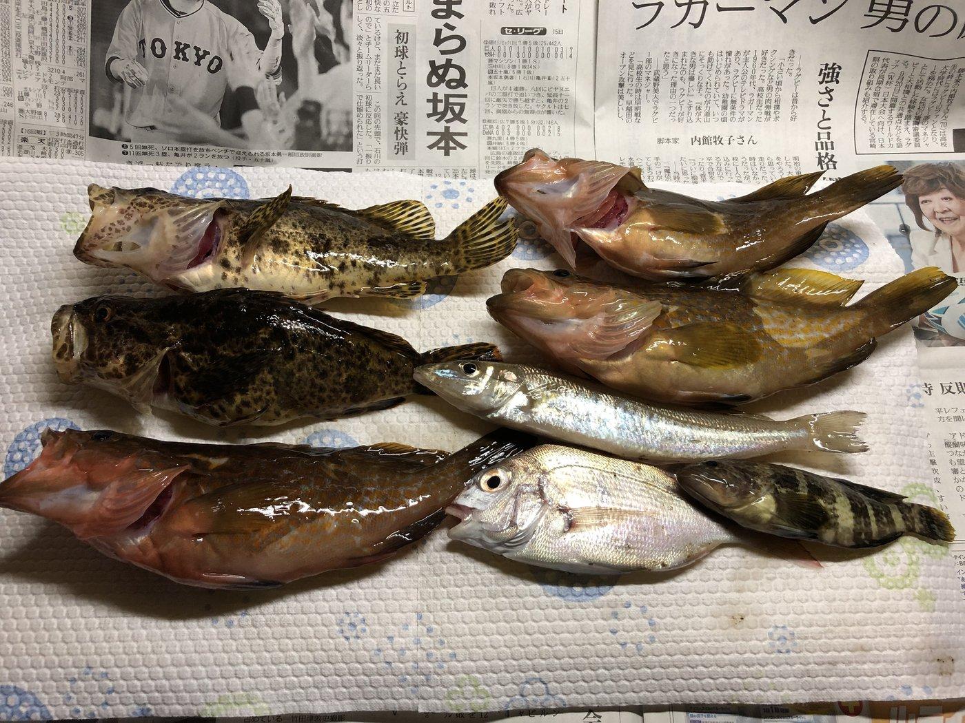 釣っ子さんの投稿画像,写っている魚はキジハタ,タケノコメバル,シロギス,マダイ,マハタ