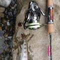 MAさんの和歌山県西牟婁郡での釣果写真