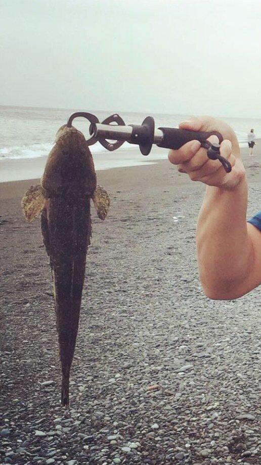 T-Monkeyさんの投稿画像,写っている魚はコチ