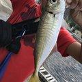 BUCCHI3さんの島根県益田市での釣果写真