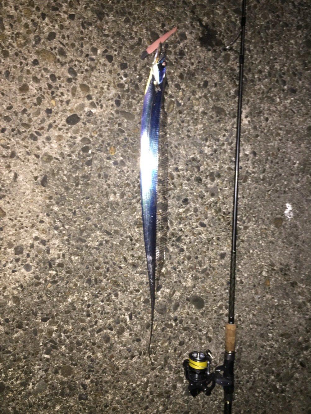 ノトさんの投稿画像,写っている魚はタチウオ