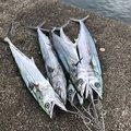 イーグルさんの石川県野々市市での釣果写真