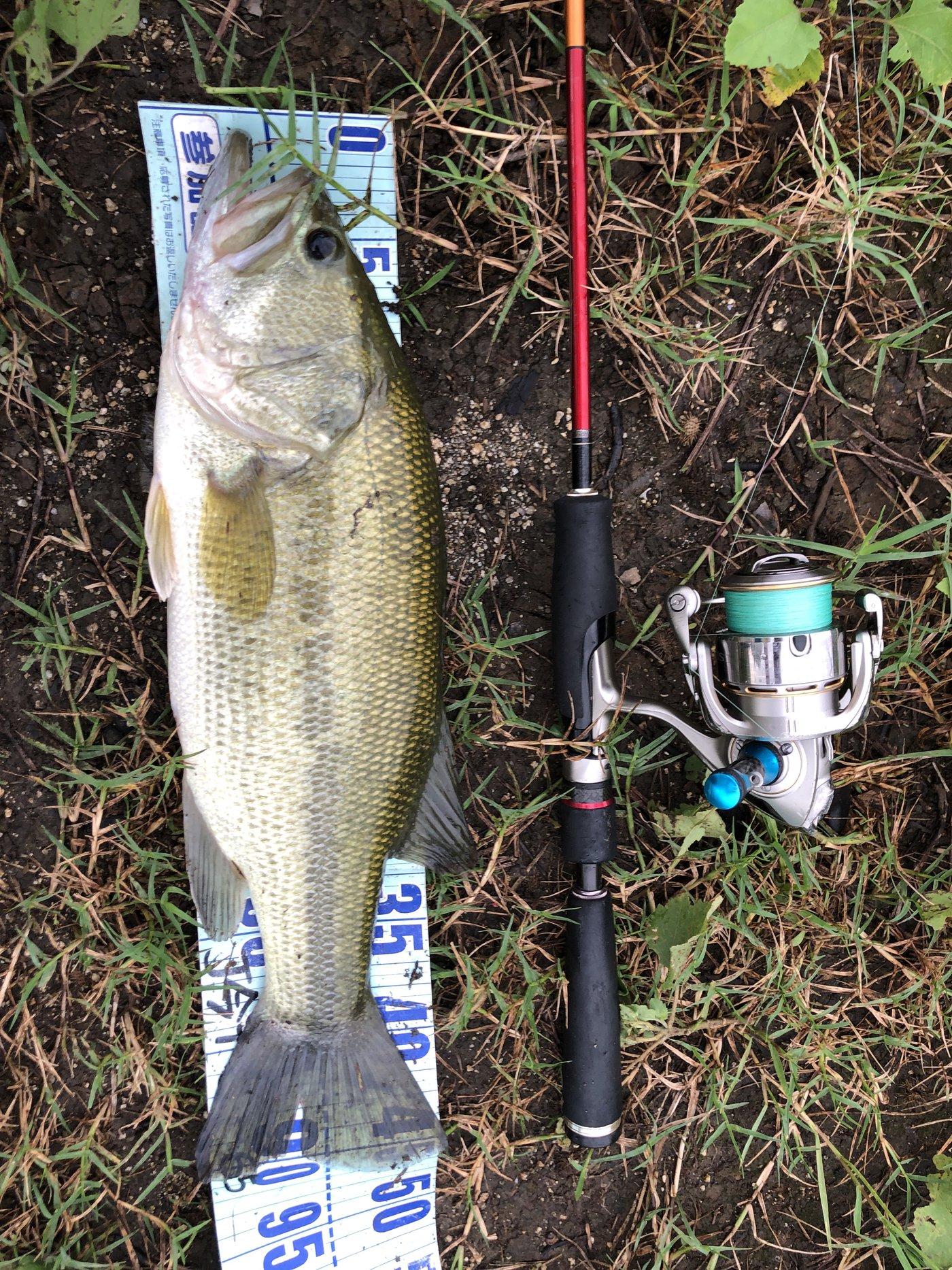 釣り課長さんの投稿画像