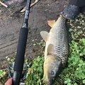 肥後釣り倶楽部🎣さんの熊本県熊本市での釣果写真