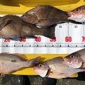 け〜たゴリラさんのオオモンハタの釣果写真
