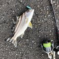 かつてのバスプロさんの鹿児島県奄美市での釣果写真