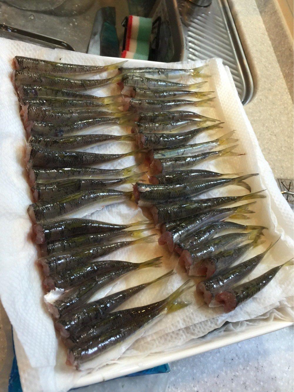 trumpeterhiro さんの投稿画像,写っている魚はカタクチイワシ