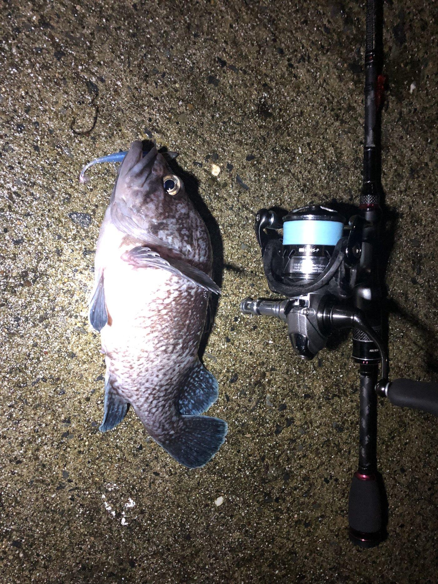 rinoさんの投稿画像,写っている魚はキツネメバル