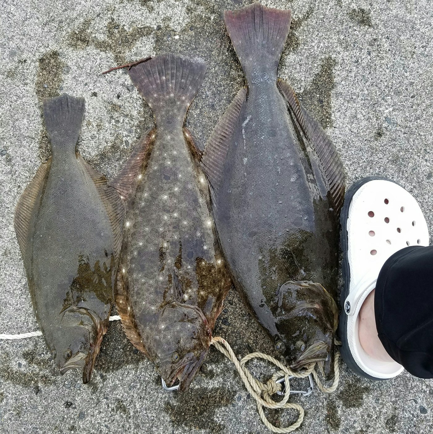 Yoshitakaさんの投稿画像,写っている魚はヒラメ
