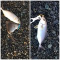 Kouji Sawaguchiさんの静岡県熱海市での釣果写真