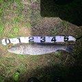 もえさんの茨城県古河市での釣果写真