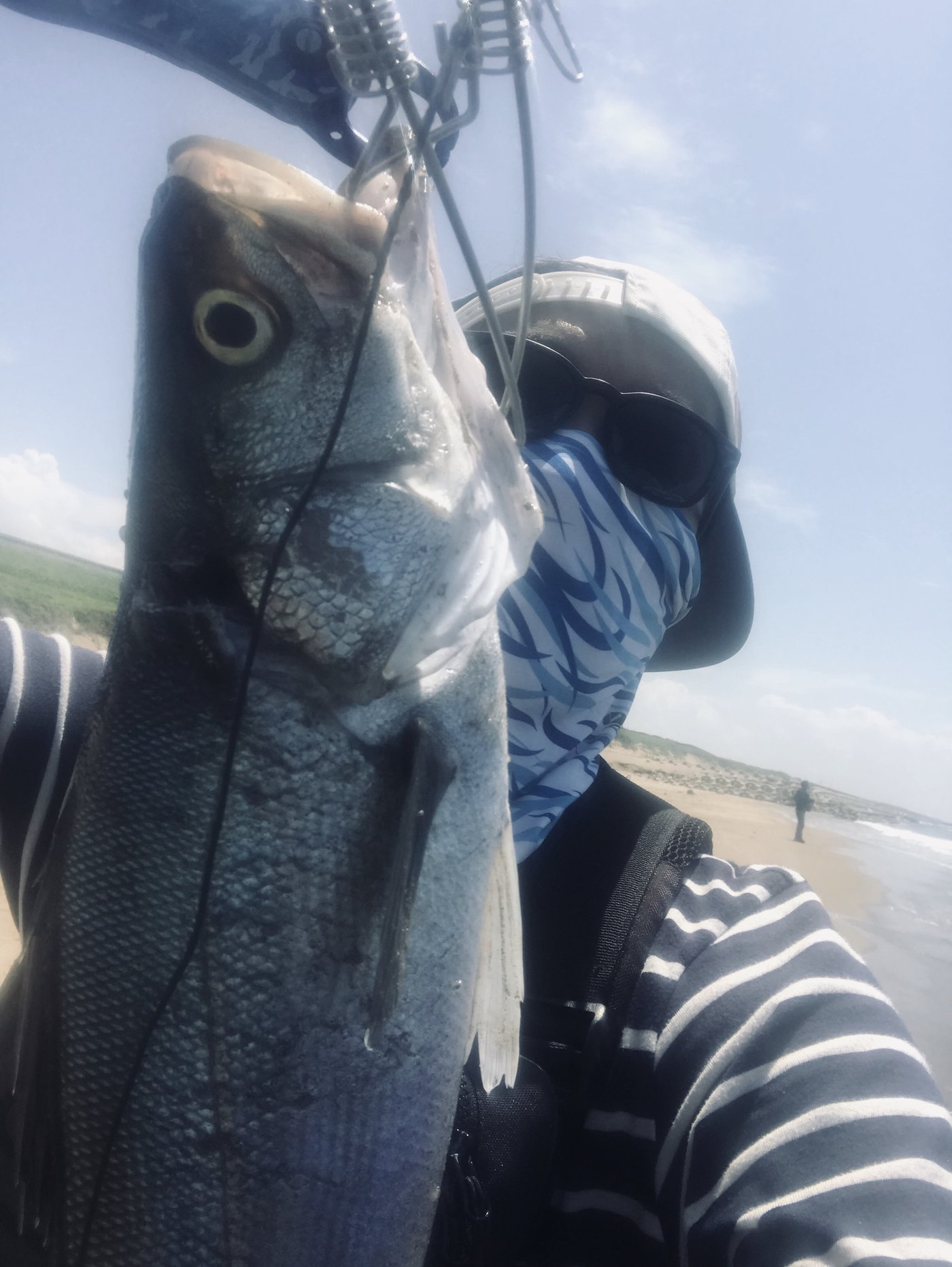 バルタンさんの投稿画像,写っている魚はスズキ