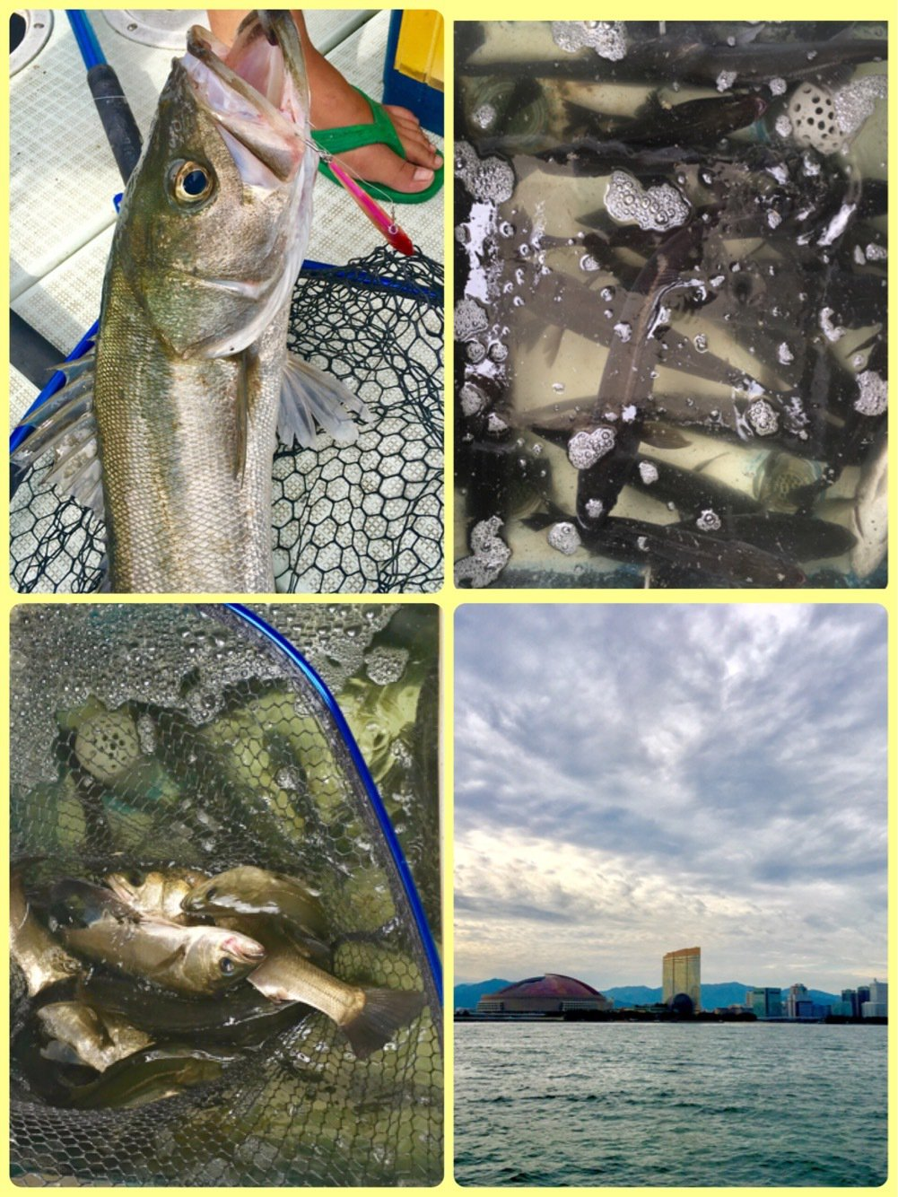 kiyosakuさんの投稿画像,写っている魚はスズキ