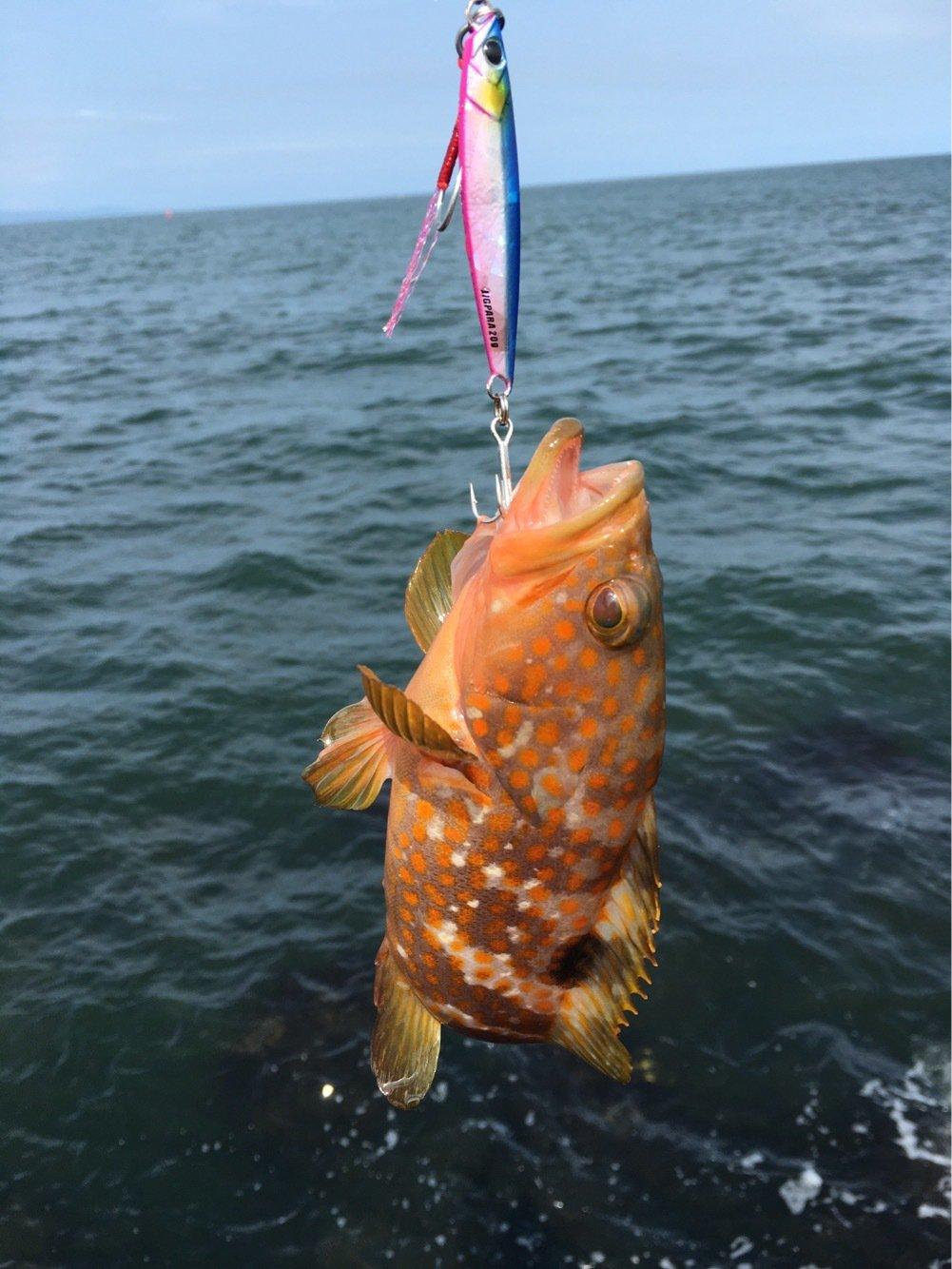 サワダマンさんの投稿画像,写っている魚はキジハタ