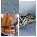 よしさんの青森県西津軽郡でのメバルの釣果写真