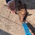 ナメックさんの香川県高松市での釣果写真