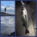 へちょさんの茨城県東茨城郡でのスズキの釣果写真