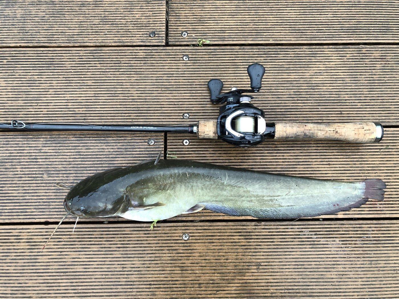 masa6127さんの投稿画像,写っている魚はナマズ