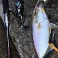 K I M Uさんの鹿児島県阿久根市での釣果写真