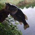 釣りバカさんの三重県いなべ市での釣果写真