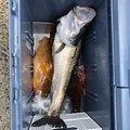 うーさんの鳥取県岩美郡での釣果写真