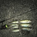 subaさんの鳥取県鳥取市でのアジの釣果写真