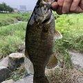 kazuさんの群馬県での釣果写真
