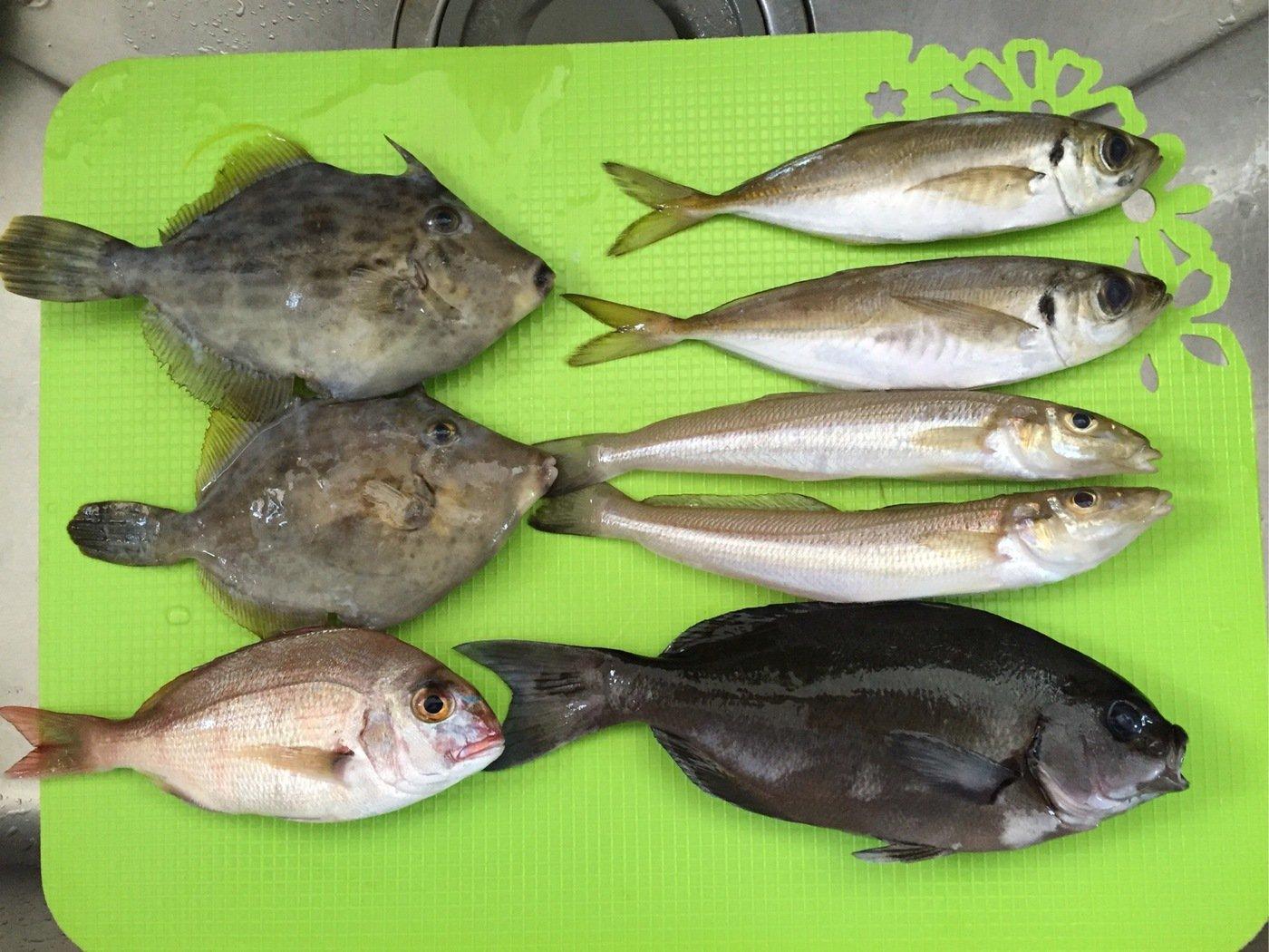 石井誠一さんの投稿画像,写っている魚はメジナ