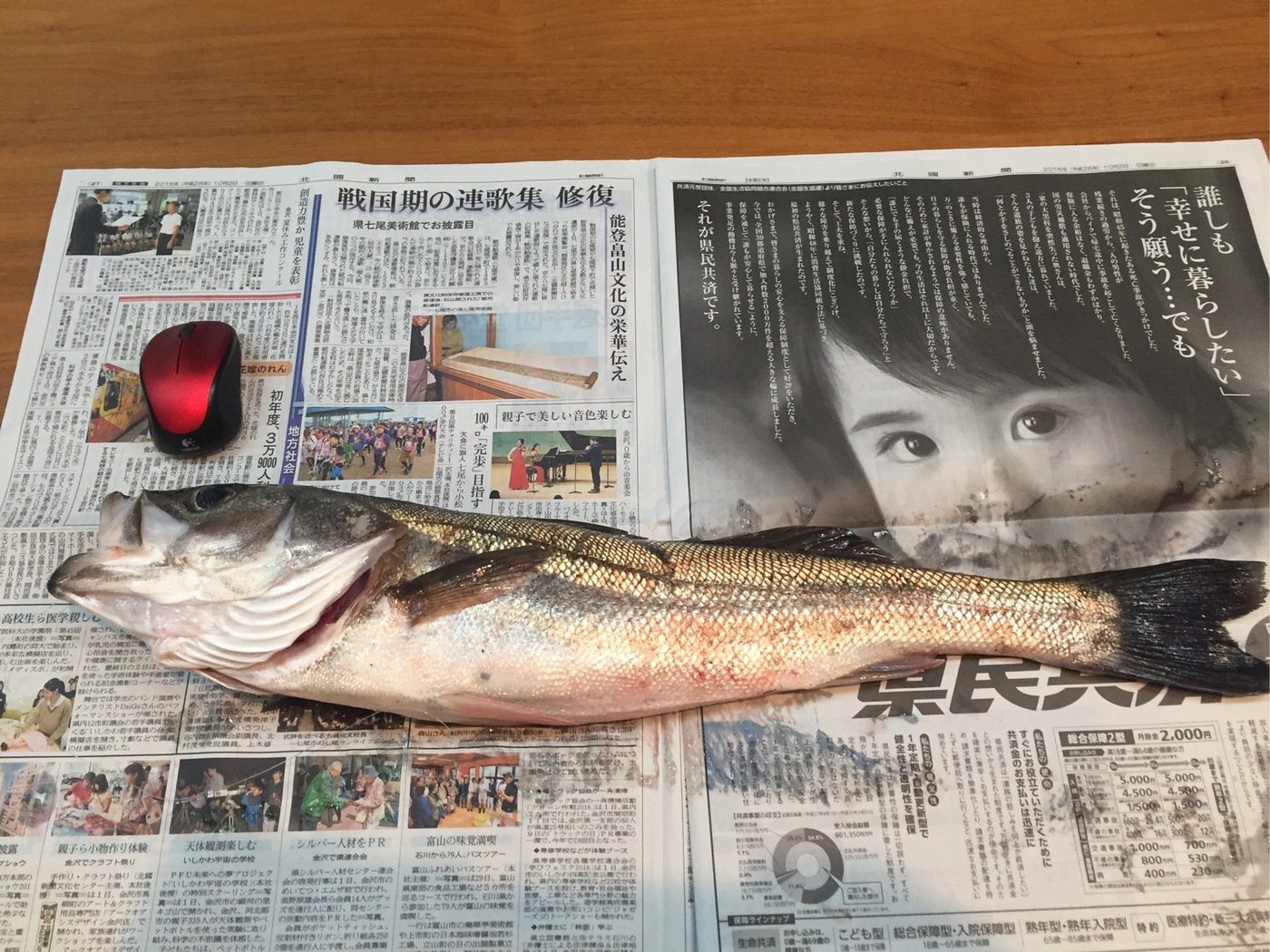 石井誠一さんの投稿画像,写っている魚はスズキ
