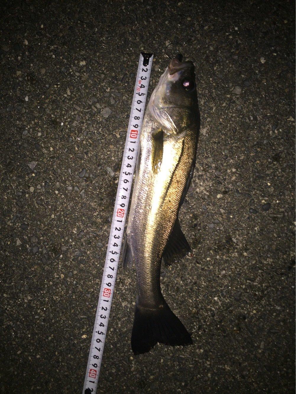 Atsushiさんの投稿画像,写っている魚はスズキ