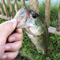 やっちんさんの兵庫県洲本市での釣果写真
