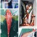 フロロカーボン100%さんの和歌山県海南市での釣果写真