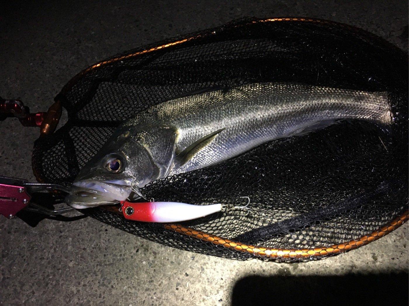 naoさんの投稿画像,写っている魚はスズキ