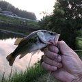 ななななおとさんの兵庫県洲本市での釣果写真
