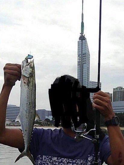 majさんの投稿画像,写っている魚はサワラ