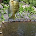 ひろヒロさんの岩手県盛岡市での釣果写真