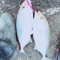 まっちゃんさんの三重県南牟婁郡での釣果写真