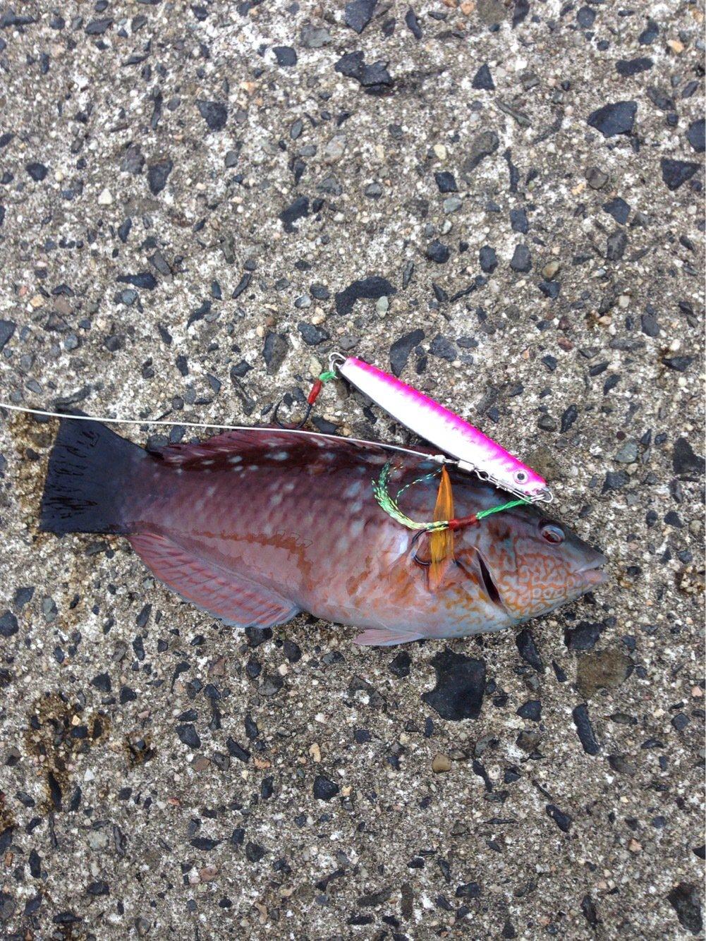 Markey×F×Dさんの投稿画像,写っている魚は