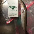 あえさんの長崎県西彼杵郡での釣果写真