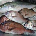 ガシさんの兵庫県南あわじ市での釣果写真