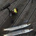 subaさんの鳥取県鳥取市での釣果写真