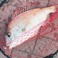 カメさんの岡山県玉野市での釣果写真