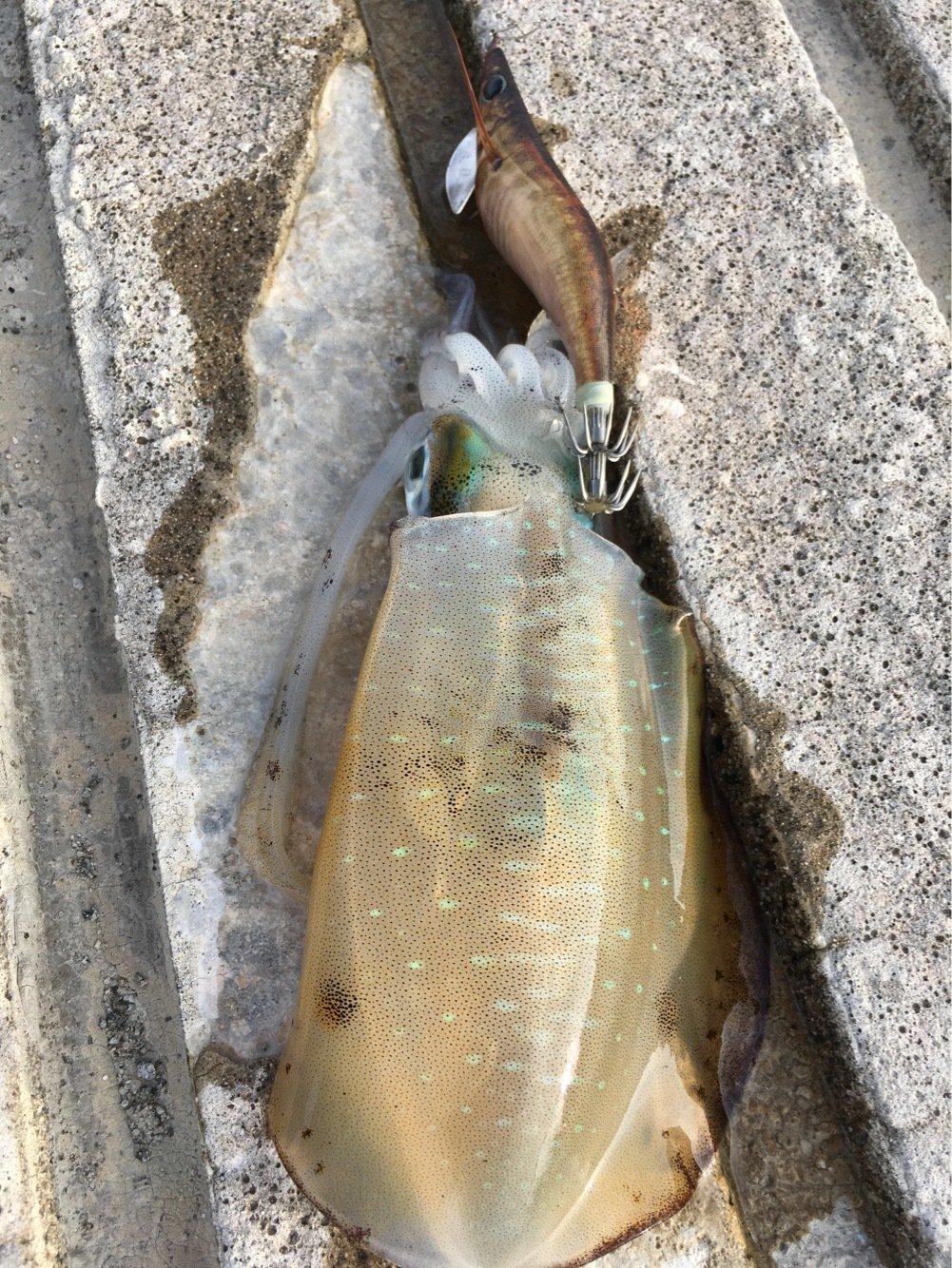 牙狼さんの投稿画像,写っている魚は