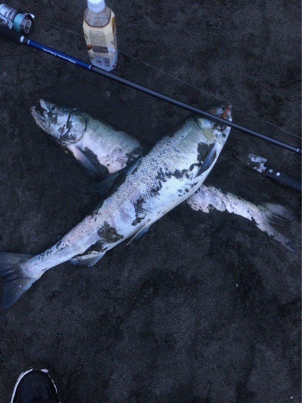 しゅうさんの投稿画像,写っている魚はサケ
