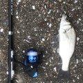 モバイル釣り師さんの高知県高知市での釣果写真